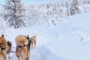 Germania launches flights to Finnish Lapland in winter 2016/17