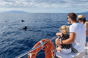 Tenerife Dolphins