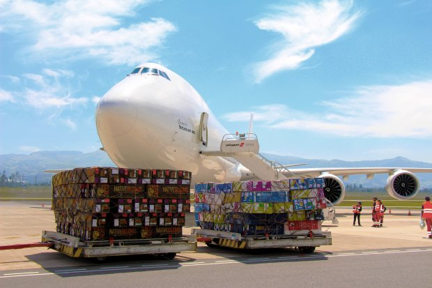 Approximately 15,000 tons of flowers will be transported from Quito to the world for Valentine's Day