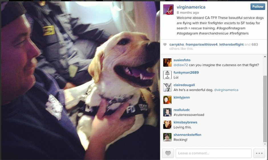 Virgin America have used an image of service dogs on one of their planes- documenting the perfect way to use a 'fun' image which is also related to the service they offer. #flyingdogs