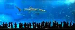 Churaumi (Okinawa Aquarium)