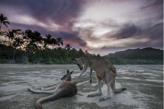 Cape Hillsborough Queensland Brisbane