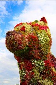 Bilbao flower dog